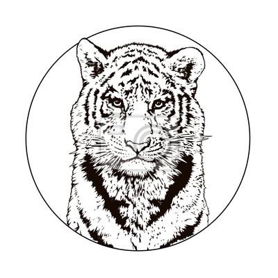 La faune. Gros chat