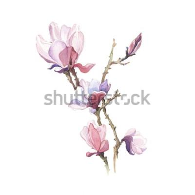 Sticker La fleur aquarelle de magnolia de printemps isolé sur fond blanc