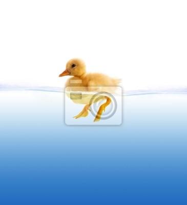 La piscine caneton jaune