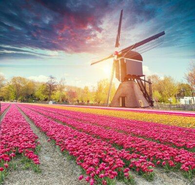 Sticker La route menant aux moulins à vent hollandais du canal à Rotterdam. Hollande. Pays-Bas