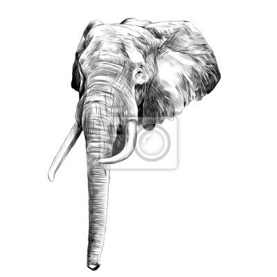 La Tete Dun Elephant Croquis Graphiques Vectoriels Dessin