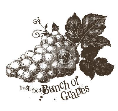 la vigne modèle de conception vecteur de logo. la vigne ou l'icône de la nourriture fraîche.