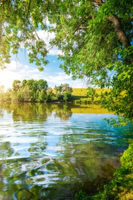 Landscape pond and forest