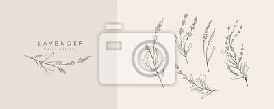 Sticker Lavender logo and branch. Hand drawn wedding herb, plant and monogram with elegant leaves for invitation save the date card design. Botanical rustic trendy greenery