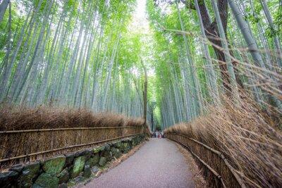 Sticker Le Arashiyama Bamboo Grove de Kyoto, au Japon.