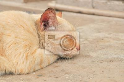 Le chat dort sur le béton