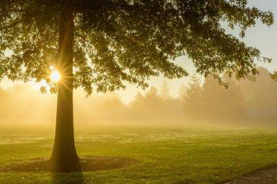 Sticker Le lever de soleil brumeux avec arbre