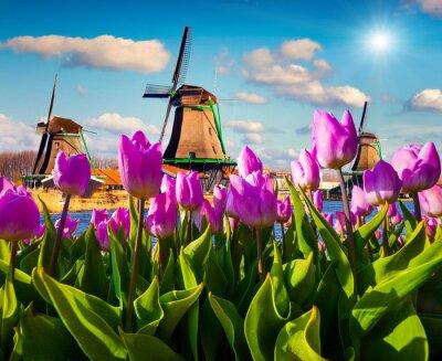 Sticker Les célèbres moulins à vent hollandais