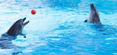 Sticker Les dauphins jouent balles