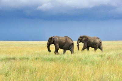 Sticker Les éléphants d'Afrique