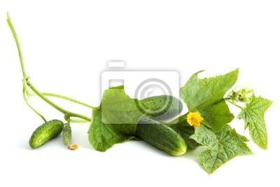 Les fleurs blanches de concombre