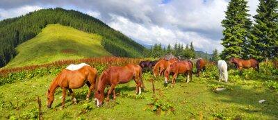 Sticker Les Mustangs des Carpates à Gorgany