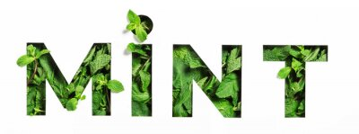 Sticker Lettering of English word mint of green natural leaves and cut paper isolated on white. Menthol typeface for decoration