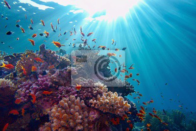 Sticker Life-giving sunlight underwater. Sun beams shinning underwater on the tropical coral reef.Ecosystem and environment conservation