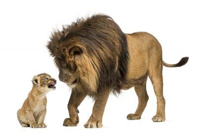 Sticker Lion debout et en regardant un lionceau