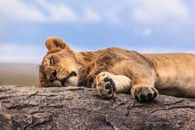Sticker Lion, dormir, rocher, Serengeti, NP, Tanzanie, afrique