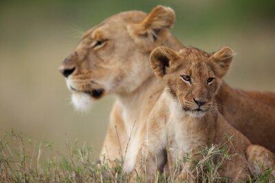 Sticker Lionceau avec sa mère dans le fond