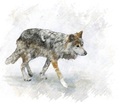 Sticker Loup Aquarelle