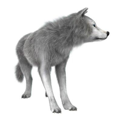 Sticker Loup polaire sur blanc