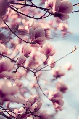 Sticker Magnifiques, rose, magnolia, fleurs