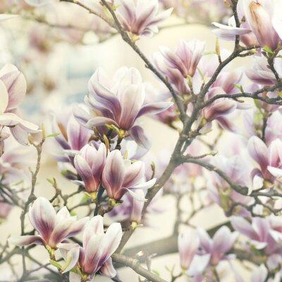 Sticker magnolia
