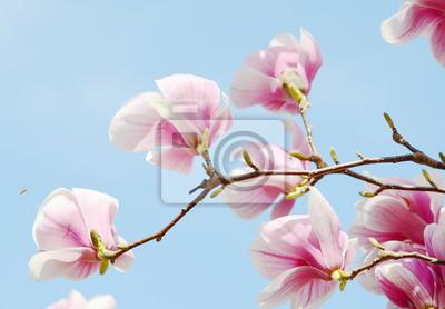 Sticker Magnolia, arbre, fleur