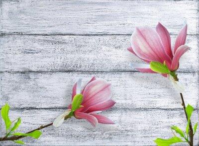 Sticker Magnolia, fleurs, fond, shabby, bois, planches