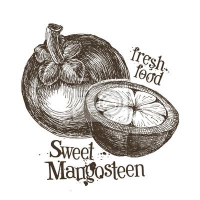 mangoustan modèle de conception de logo. fruits frais, de la nourriture ou de la récolte
