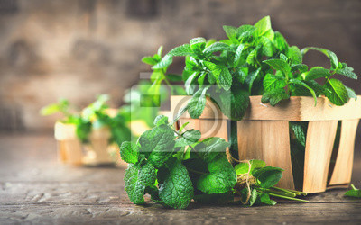 Sticker Menthe. Bouquet de feuille de menthe bio vert fraîche sur la table de bois de taille