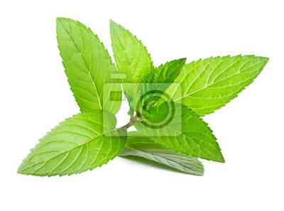 Sticker Menthe verte fraîche isolé sur blanc