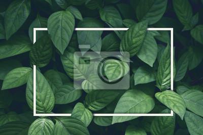 Sticker mise en page créative, feuilles vertes avec cadre carré blanc, plat poser, pour carte publicitaire ou invitation