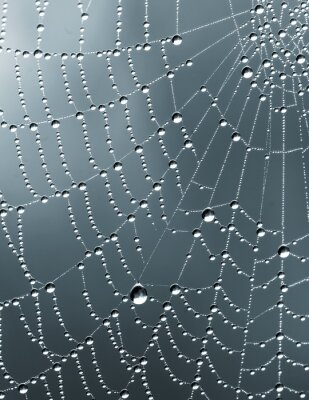Sticker Monochrome pluie tombe sur une toile d'araignée