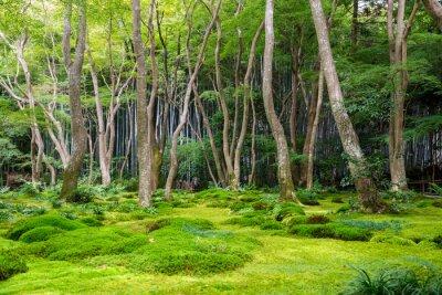 Sticker Moss, jardin, vue, Arashiyama, Kyoto