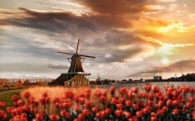 Sticker Moulins à vent hollandais avec des tulipes rouges fermer Amsterdam, Pays-Bas