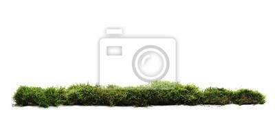 Sticker Mousse verte avec de l'herbe isolé sur fond blanc