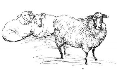 Sticker Mouton et mouton