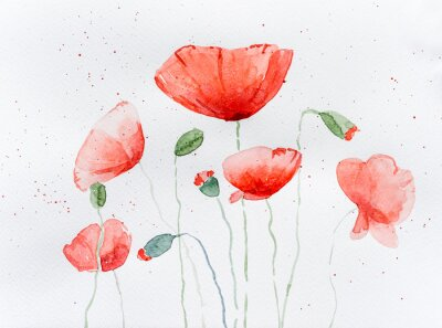 Sticker Natural drawing of poppy flowers
