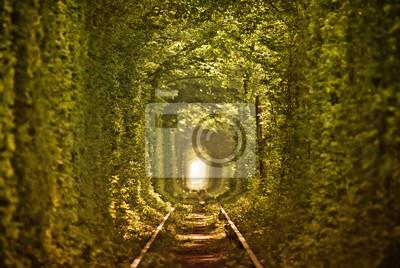 Natural Tunnel of Love formée par les arbres en Ukraine