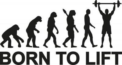 Sticker Né pour élever l'évolution des haltérophiles