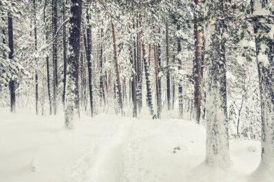 Sticker Neige dans la forêt d'hiver.