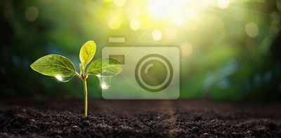 Sticker New Life Young Plant au soleil. Jardinage