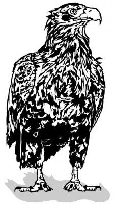 Sticker Noir, blanc, aigle, contour, Illustration, vecteur