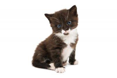 Sticker Noir, blanc, chaton, isolé