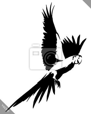 Sticker Noir Et Blanc Peinture Dessiner Perroquet Oiseau Vecteur