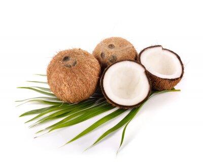 Sticker Noix de coco sur fond blanc