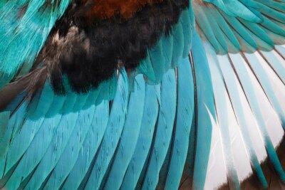 Sticker Oiseau. Animal.