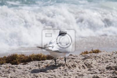 Oiseau, regarder, mer