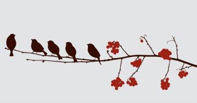 Sticker Oiseaux sur la branche rowan
