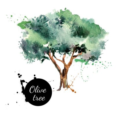 Sticker Olive tree vector illustration. Hand drawn watercolor painting