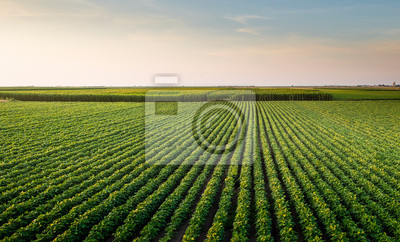 Sticker Open soybean field at sunset.